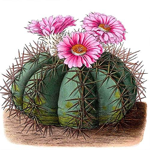 5D DIY Diamant Peinture Kit de Numéro,Cactus Plein Rond Perceuse Broderie Point De Croix Kits,Canevas Diamond Painting Strass Complet Art Salon Chambre Décor 40x40cm