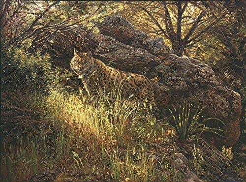 "Lince Ibérico - ""El ultimo Lince"" - Lámina sobre lienzo. Cuadro de Lince ( Lynx pardina ) 40 x 30 cms. Cuadros de animales, mamíferos"
