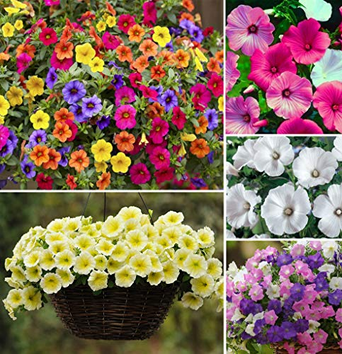 200+ Mixed Petunia Climbing Flower Seeds Plants Annual Flower Bonsai Decorative