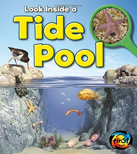Tide Pool: Look Inside (Look Inside A)