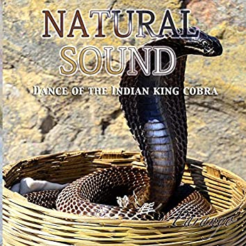 Natural Sound (Dance of the Indian king cobra)