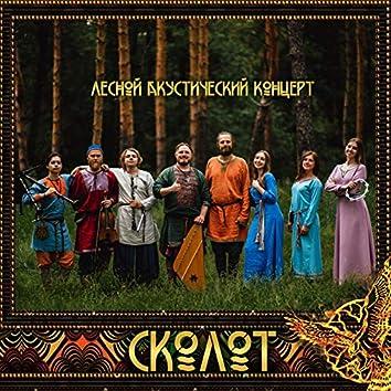 Лесной акустический концерт
