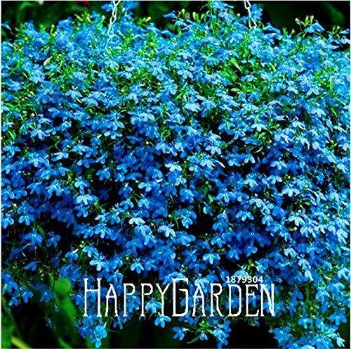 100 Graines A Lot Big Sale! Lobelia Seeds, Blue Carpet Easy Grow Semences pour jardin maison bricolage décoration Graines de fleurs