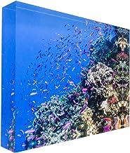 Fish on Tropical Coral Great Barrier Reef Acrylic Block Photo Print Carl Chapman 0983 (30x20x3cm (12x8x1.2in))