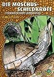 Die Moschusschildkröte: Sternotherus odoratus (Art für Art / Terraristik)