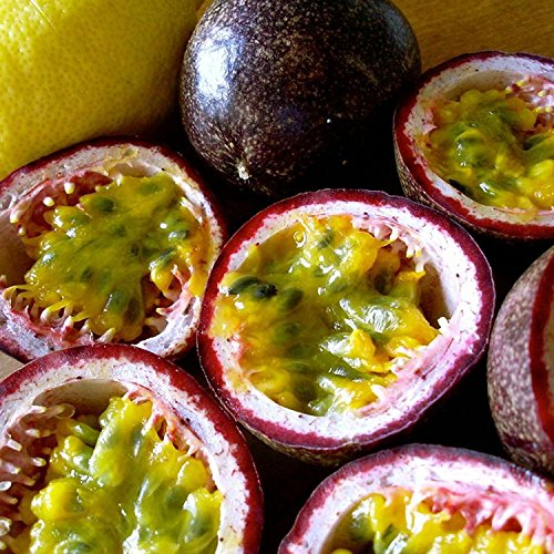 Purple Passionfruit Seeds (Passiflora edulis) 10+ Tropical Passion Fruit Seeds in 'FROZEN SEED CAPSULES' for the Gardener & Rare Seed Collector - Plant Seeds Now or Save Seeds for Years