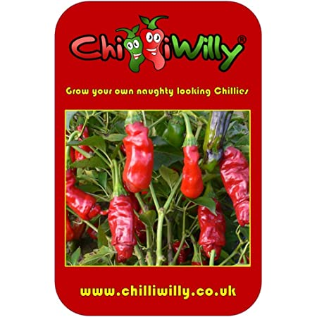 Willy Chilli 10 Seeds,Penis Chili Peter Pepper Chilli Seeds