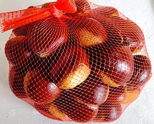 岐阜県産(中津川市産) 朝採り フレッシュ 栗 ( 生くり )特上  約1kg 予約受付中