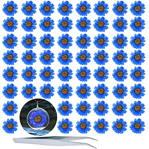 HEISENLIN, 60 unidades de flores secas prensadas naturales de margaritas secas de color azul, flores secas con pinzas para resina para joyería, jabón, álbumes de recortes,...