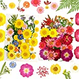 YMHPRIDE 78 Piezas DIY Conjunto de Flores secas, Margaritas secas Naturales Reales, Velas, joyería de Resina, Colgante de uñas, Manualidades para Hacer Fondos de Flores artísticas