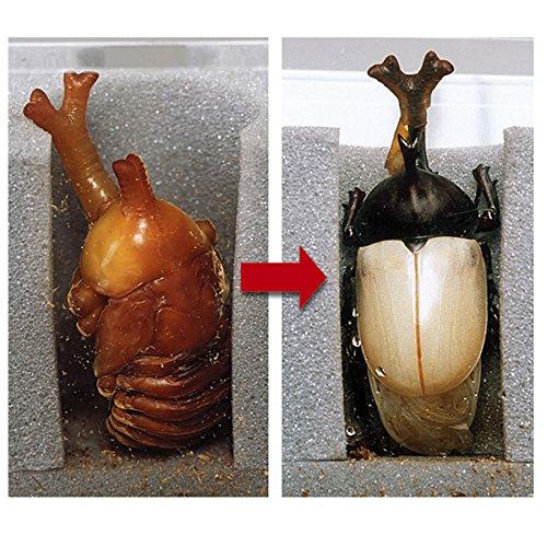 ミタニ人口蛹室サナギのへやBK-09
