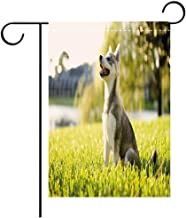 BEICICI Double Sided Premium Garden Flag Alaskan Malamute Klee Kai Puppy Sitting on Grass Looking Up Friendly Young Cute Animal Decorative Multicolor Best for Party Yard and Home Outdoor Decor