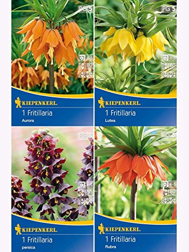 Sortiment Kaiserkronen Fritillaria 4er-Pack
