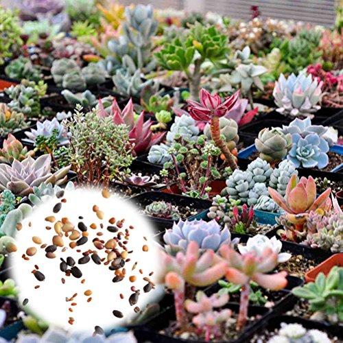 Rosepoem 400 Pcs Plantes Succulentes Graines Mélanger Cactus Lithops Plantes Ornementales Graines Accueil Jardin Plantes