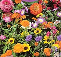 Image: Hirts Wildflower Seeds | 1000+ Low Growing | Our Wildflower mixes are specially formulated to provide waves of beautiful color and low-maintenance beauty