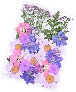 Daimay 34 PCS Fleurs séchées Naturelles Mixed Multiple Real Pressed Flowers Assortiment coloré pour la résine de Bricolage...