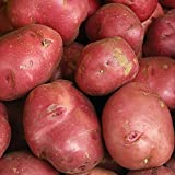 Red potatoes have a light, subtly sweet flavor Excellent for roasting, grilling, mashing and salads