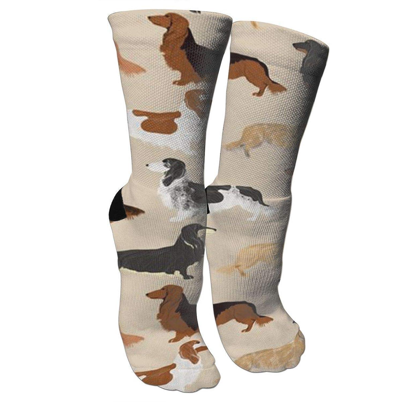 靴下 抗菌防臭 ソックス 長い髪ダックスフント犬スポーツスポーツソックス、旅行&フライトソックス、塗装アートファニーソックス30 cmロングソックス
