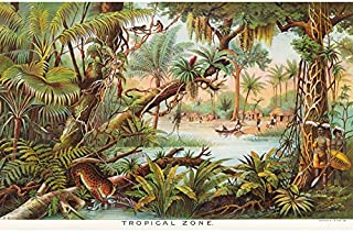 Map Yaggy 1893 Tropical Zone Jungle Animals Art Print Canvas Premium Wall Decor Poster Mural Carte Animaux Mur Déco Affiche