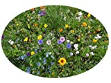 SPAREN Sie zusätzliche Versandkosten und bestellen mehrere Artikel aus unserem großen Sortiment: Alles rund um den Garten -> Seedshop24
