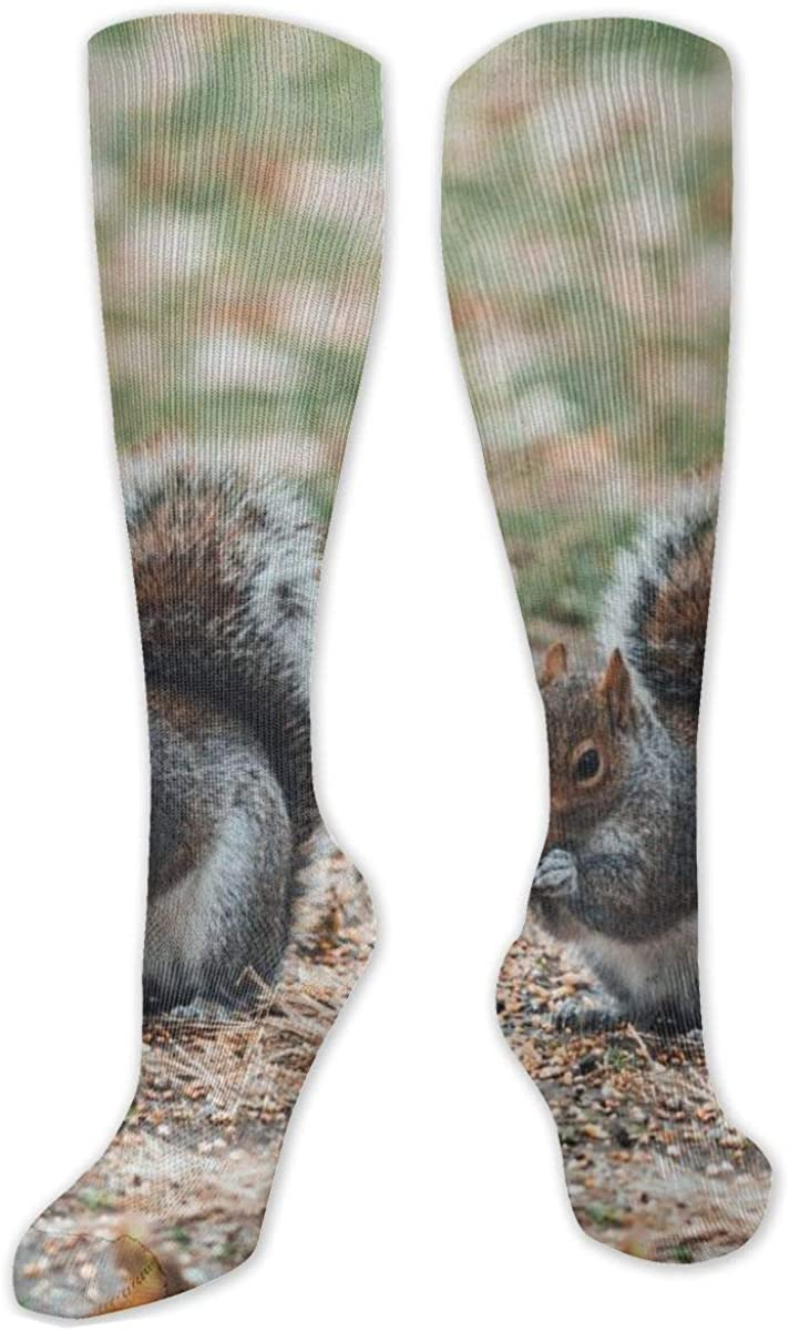 Brown And Gray Squirrel Knee High Socks Leg Warmer Dresses Long Boot Stockings For Womens Cosplay Daily Wear