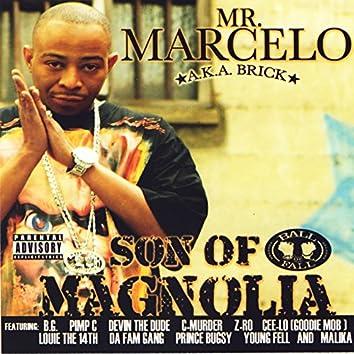 Son Of Magnolia