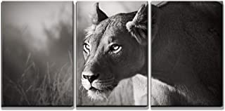 wall26 - 3 Piece Canvas Wall Art - Lioness Stalking - Kalahari Desert Artistic Processing - Modern Home Decor Stretched and Framed Ready to Hang - 16