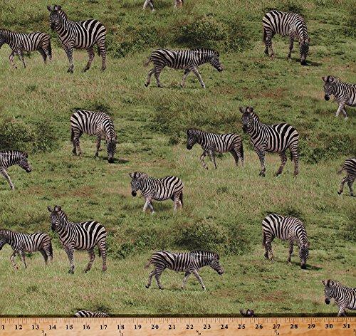 Cotton Zebras Zebra Animals Wildlife Savanna Grasslands Africa African Safari Nature Scenic Born Free Green Cotton Fabric Print by The Yard (112-31931)