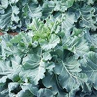 無農薬 化学肥料不使用 ケール 生葉 2kg 無農薬栽培 茨城県産 青汁 国産 葉 ケール生葉