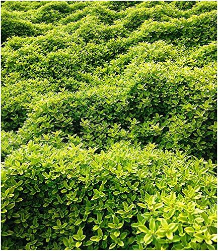 Baldur-Garten -  Baldur Garten
