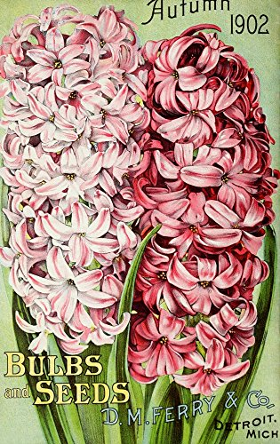 DM Ferry Bulbs & Seed Catalogue 1902 Hyacinths Poster Print by Unknown (18 x 24)
