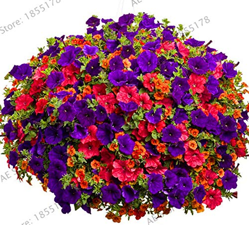Pinkdose Beförderung!100 STÜCKE Hängende Petunienpflanzen Melissa Ursprüngliche Blume Plantas Mehrjährige Blumen Für Hausgarten Bonsai Topf Pflanzen P: 12