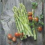 Steelwingsf Semi In Vaso Per La Casa E Il Giardino, 100 Pz/Borsa Semi Di Asparagi Non OGM Facile Da Piantare Semi Di Ortaggi Freschi E Belli All'aperto Per La Casa Semi di asparagi