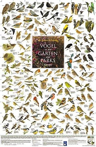Vögel in den Gärten und Parks Europas (Tierposter-Box)