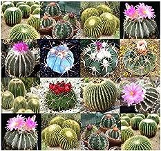 ScoutSeed (20) ESPECIES DE ECHINOCACTUS SEMILLAS mixtas - Golden Barrel Cactus - Combined S&H