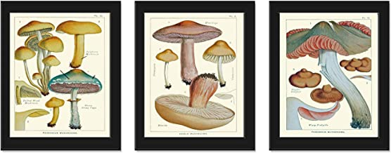 Mushroom Print Set of 3 Antique Botanical Beautiful Beige Brown Aqua Natural Colored Mushrooms Forest Nature Home Room Dec...