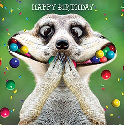 Funny Erdmännchen Geburtstagskarte Ooooo I Say