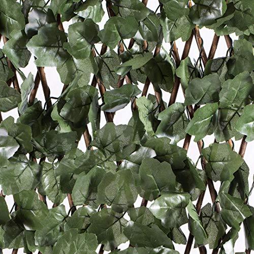 Celosia Extensible con Hojas Basic 1x3