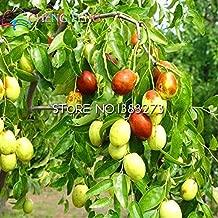 shopmeeko hot Sale 20pcs/lot Big Japanese jujube Plants Honey Sweet Fruit Seeds DIY Plant Tree Seeds semillas for Home gardenp: Multi-Colored
