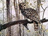 FGHJSF Pintura por Números Pájaro Animal Gris DIY Pintura al óleo con Pinceles y Pinturas para Adultos Niños Principiantes Decoración del Hogar Y Regalo - 40 x 50 cm (Sin Marco)