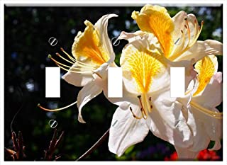 Switch Plate Triple Toggle - Azalea Blooms Flower Spring Nature Plant Bloom