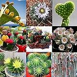 Soteer Garten - 100 stück Kaktus Samen mixed Sukkulenten Samen Mischung Bonsai Hausgarten Balkon...