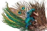 Tigofly Pfauenfeder Set Schwert Schwanz Herl Quills Feder für Nymphen nasse Fliegen Classic Fliegenbinden Materialien