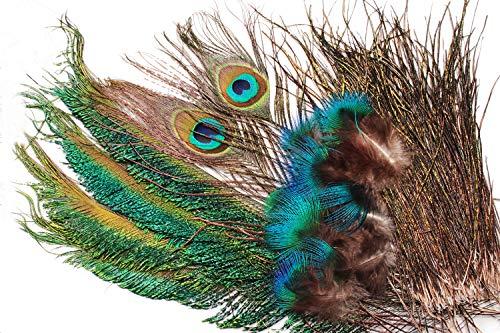 Tigofly - Set di piume di pavone con coda di spada, piume per ninfe e mosche bagnate, materiali classici per legare la mosca