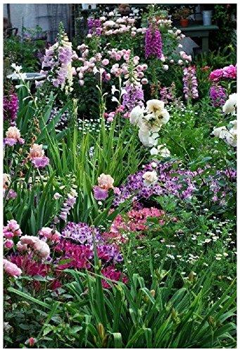 Lot de 100 graines de mélange Cottage Garden - mix à planter - annuelles