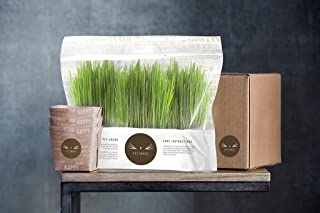 Pet Grass - 100% Organic Fresh Cat Grass Delivery Comes in an Already Grown 3 Pack, Delivered Fresh to Your Door! Sourced and Grown in The USA.