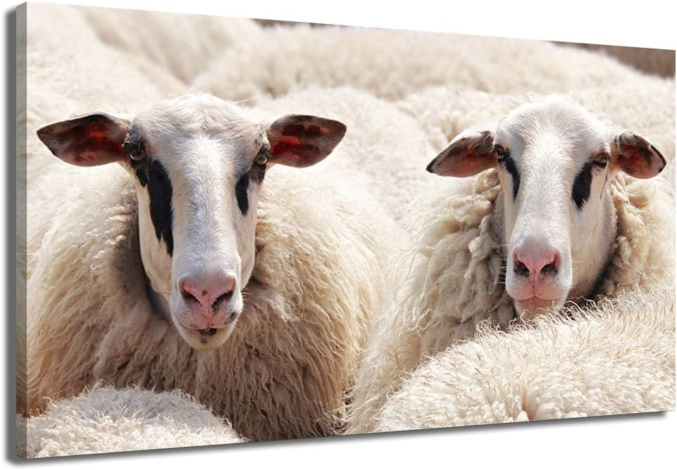 KLVOS Farm Animal Canvas Picture Wall Sheep Lamb Art New York Mall Direct sale of manufacturer White Poste