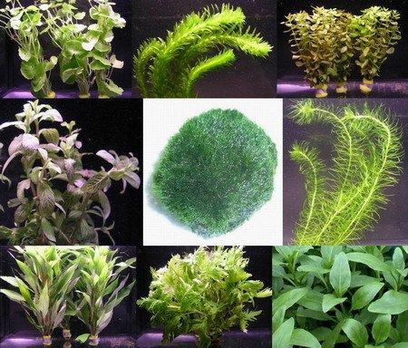 WFW wasserflora -   Anti-Algen-Set,