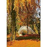 Fondo de fotografía de Paisaje Natural Paisaje de Bosque de otoño Fondo de fotografía de Viaje Accesorios de fotografía de Estudio A10 9x6ft / 2,7x1,8 m