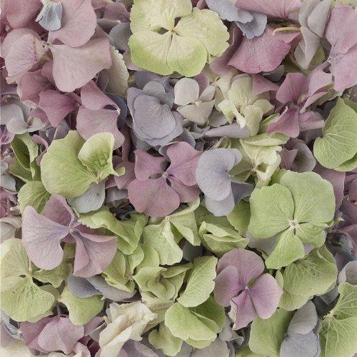 Hortensienblüten, schockgefrostet, verschiedene Farben, 0,568l (1Pint)